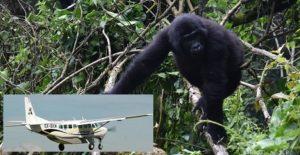 6 Days Masai Mara fly safari and Gorilla tracking Bwindi