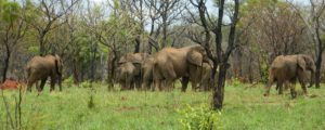 what you didn't know about elephants