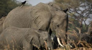 7 Places to safari in Uganda on a 9 Days Uganda Safari
