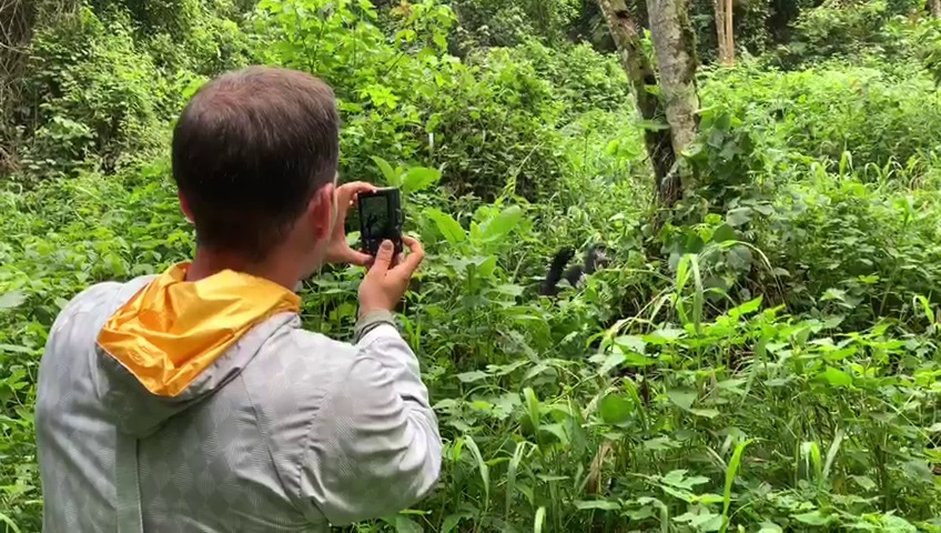 Gorilla trekking safari in Bwindi forest