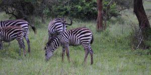 Visit Uganda day tour