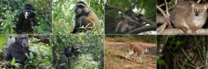 Visit Uganda the Primate World