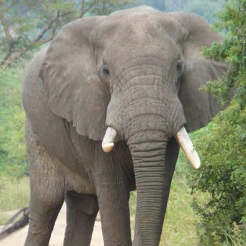 akagera park elephants